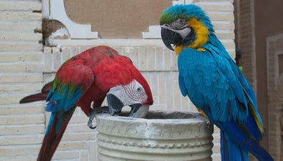 What Kind of Food Do Parrots Eat?