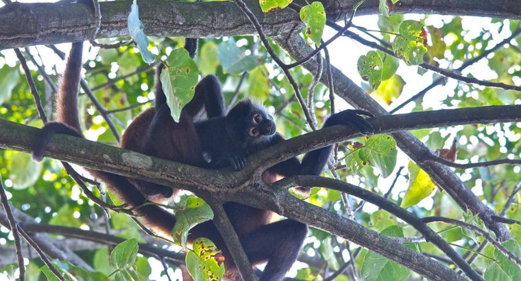 What Kinds of Animals Live in Trees?