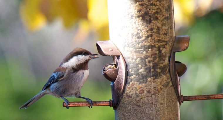 What Kinds of Food Do Birds Eat?