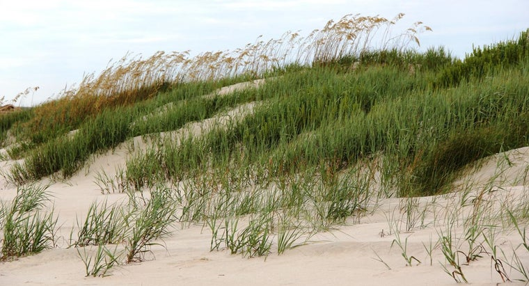 What Kinds of Grass Grow in Sand?