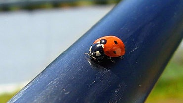 What Kinds of Ladybugs Are Poisonous?
