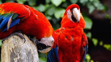 What Kinds of Sounds Do Parrots Make?