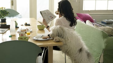 What Kinds of Table Food Can Dogs Eat?