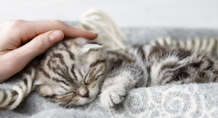 Cat Behavior Explained: Why Cats Knead