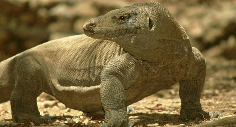 Where Do Komodo Dragons Live?