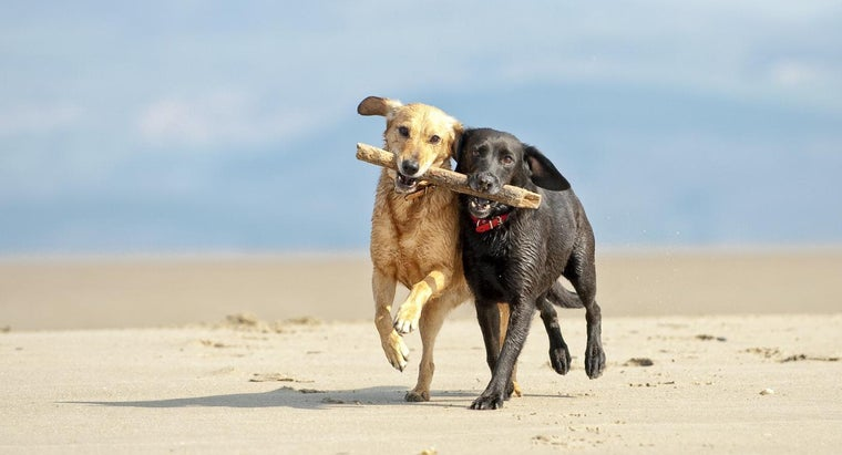 Where Do Labradors Originate From?