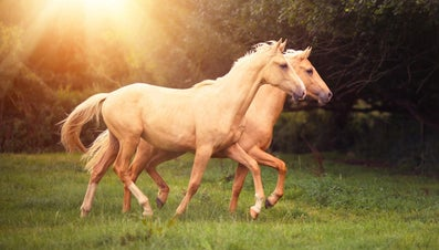 What Is Laminitis in Horses?