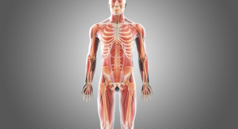 What Is The Largest Bone In The Human Body Reference