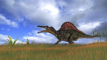 What Was the Largest Carniverous Dinosaur?