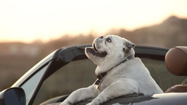 What Is the Law on Leaving Your Dog in the Car?