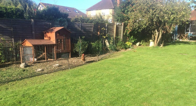 What Are Some Lawn Maintenance Tips?