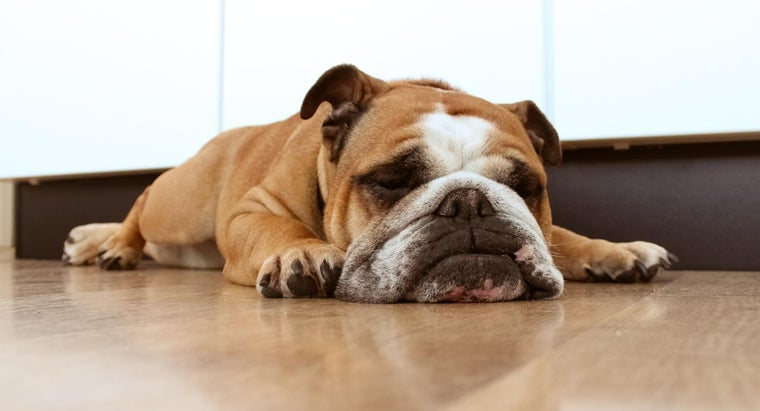 What Are Some Lazy Dog Breeds?