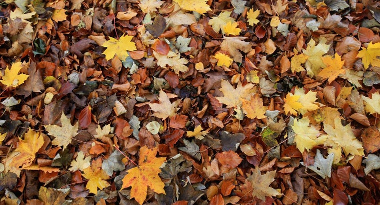 Why Do Leaves Fall Off Trees in Autumn?