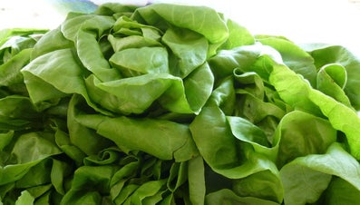 Why Does Lettuce Turn to Mush When Frozen?