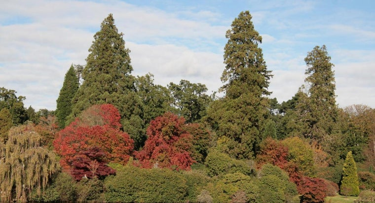 What Is a List of Deciduous Trees?