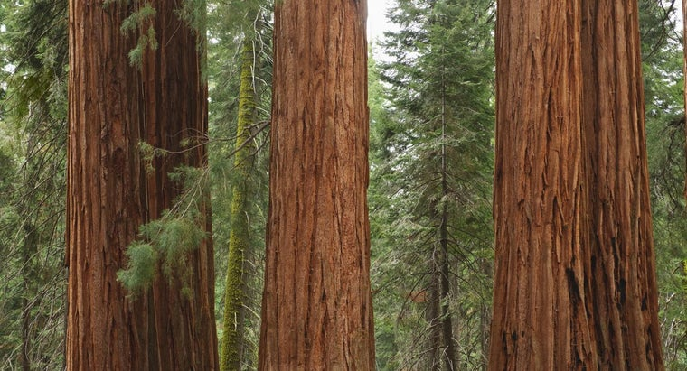 What Is the List of National Parks in California?