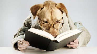 What Are Some Literary Dog Names?