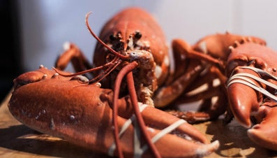 How Do Lobsters Breathe?