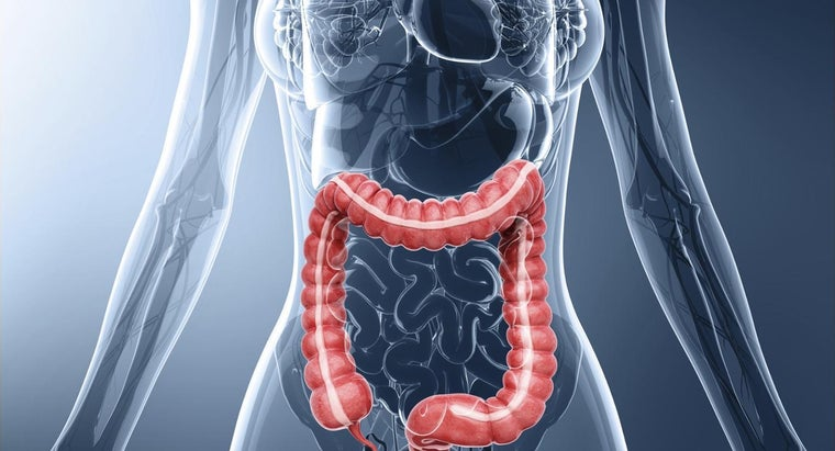 How Long Is the Average Colon?