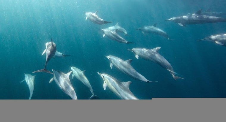 How Long Can Dolphins Stay Underwater?
