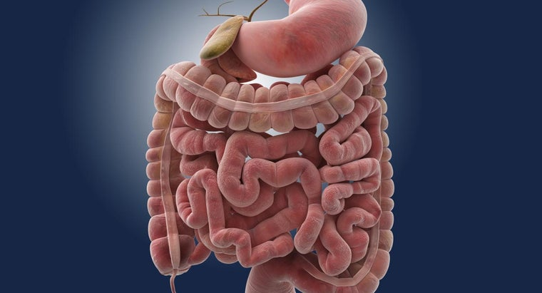 How Long Can It Take Food to Travel Through the Small Intestine ...