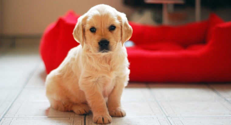 How Long Can a Puppy Hold Its Bladder?