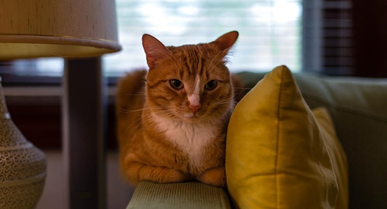 How Long Have Cats Been Domesticated?