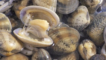 How Long Do Clams Live?