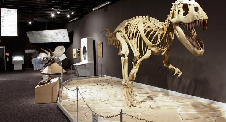 How Long Did Dinosaurs Live?