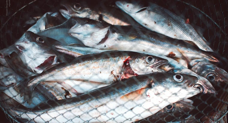 How Long Does It Take to Digest Fish?