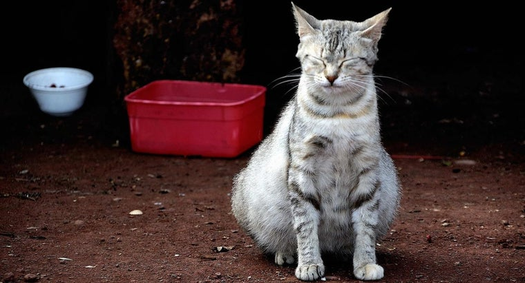 How Long Do Female Cats Stay Pregnant?