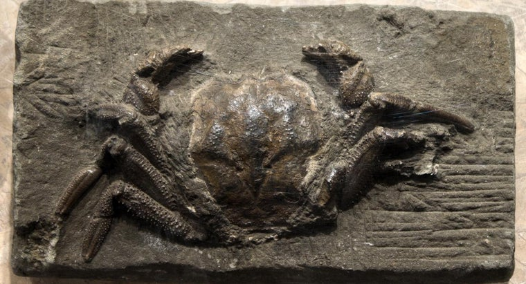 How Long Does It Take for a Fossil to Form?