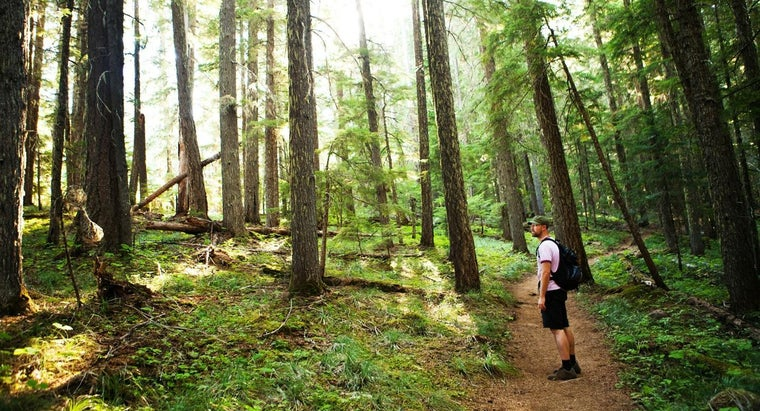 How Long Does It Take to Hike the Pacific Crest Trail?