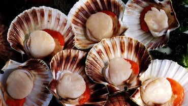 How Long Do Scallops Stay Fresh in the Refrigerator?