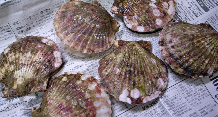 How Long Do Scallops Stay Fresh?