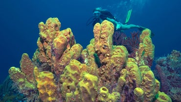 How Long Do Sponges Live?