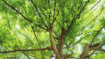How Long Does It Take for a Tree to Grow to Full Size?