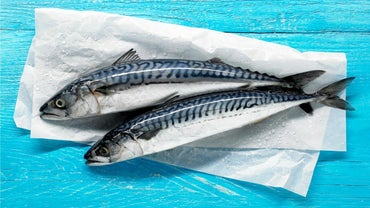 When Is Mackerel Season?