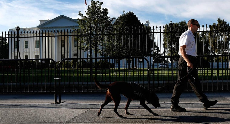 What Is the Main Duty of the Executive Branch?