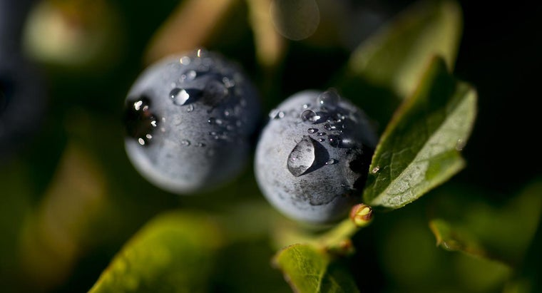 Why Does Maine Have a Blueberry Tax?