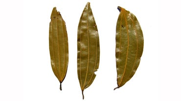 How Do You Make Bay Leaf Tea?