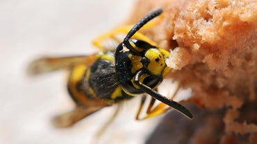 How Do You Make a Homemade Wasp Killer?