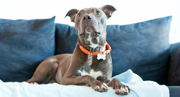 What Are Some Male Pit Bull Names?