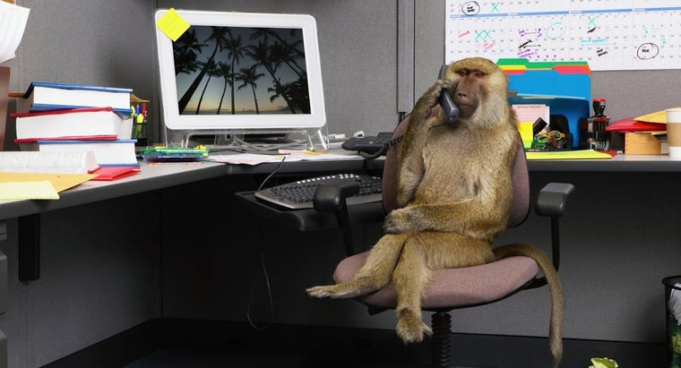 What Mammals Other Than Humans Use Computers?