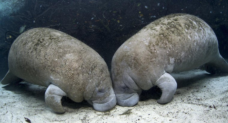 What Are Some Facts About Manatees?