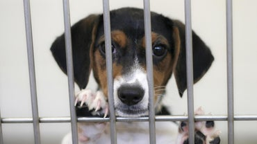 How Many Animals Are Abandoned Each Year?