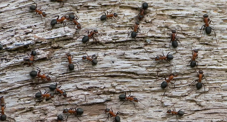 How Many Ants Are There in the World?