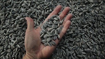 How Many Calories Are in Sunflower Seeds?