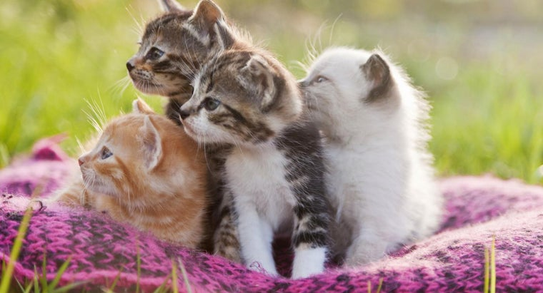 How Many Cat Breeds Are There?