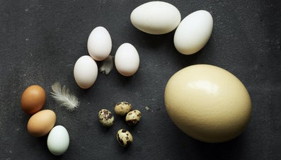 How Many Chicken's Eggs Is an Ostrich Egg Equivalent To?